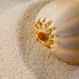 Shells and sand background Royalty Free Stock Photo