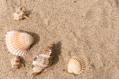 Shells in the sand, background. Shells on the yellow sand, background Stock Photo