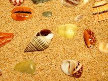 Shells on sand beach. Random variegated shells on light sand Stock Photo