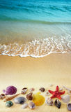 Shells on sand beach stock photos