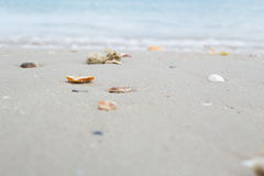 Shells on sand beach. The shells on sand beach royalty free stock image