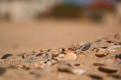 Shells in the sand on the beach background. Selective focus. Shells in the sand on the beach background stock photos