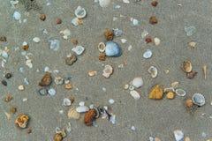 Shells on the sand beach Stock Image