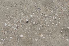 Shells in the sand on the beach in the summer. Ocean wave lap the shore, blowing shells in nature Select focus front Shells with copy space and may be used as royalty free stock images