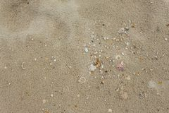 Shells in the sand on the beach in the summer. Ocean wave lap the shore, blowing shells in nature Select focus front Shells with copy space and may be used as stock photos