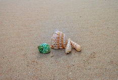 Shells on the sand. Beautiful shells on the beach waiting the summer Royalty Free Stock Photos