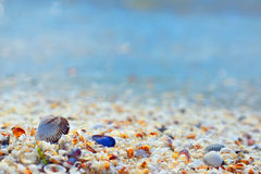 Shells and sand Stock Photography