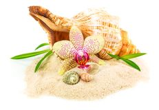 Shells on sand with flower and bamboo Stock Photos