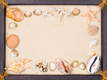 Shells on sand in frame Stock Photography
