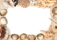 Shells on sand frame Royalty Free Stock Image
