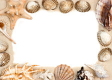 Shells on sand frame Stock Images