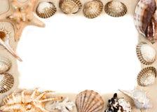 Shells on sand frame Stock Images