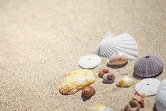 Shells and sand. An image of some nice shells in the sand Royalty Free Stock Images
