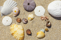 Shells and sand. An image of some nice shells in the sand Royalty Free Stock Image