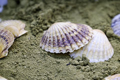 Shells on the sand Stock Photography