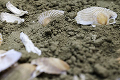 Shells on the sand Royalty Free Stock Photography