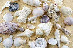 Shells on the sand A pile of assorted empty shells scattered in the sand. Diferent colors and shapes Stock Photos