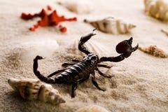 Shells, sand and scorpion Stock Photo