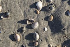 The Shell on the Sand. The shells are on the sand of the sea`s edge Stock Photo
