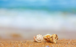 Shells in sand on the sea side Stock Photos