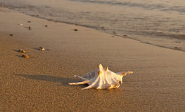 Shells on the sand by the sea at sunset Stock Image