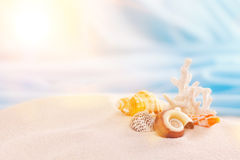 Shells in sand Stock Photo