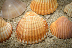 Shells on sand. Some nice shell on the sand Royalty Free Stock Photography