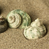 Shells in the sand. Square format Royalty Free Stock Image
