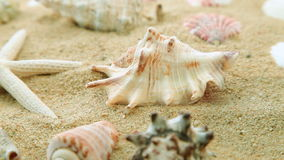 Shells and sand. Shells and starfish on sand on beach, close up, dolly shot stock video