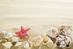 Shells in sand Royalty Free Stock Images