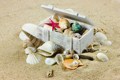Shells on sand. starfish. treasure sea Royalty Free Stock Image