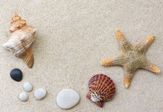 Shells on the sand Royalty Free Stock Image