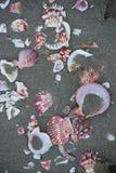Shells on the sand Stock Image