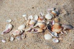 Shells on the sand. On the Tyrrhenian sea Royalty Free Stock Photo