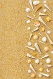 Shells and Sand Stock Image