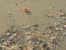 Shells on the sand. Royalty Free Stock Photos