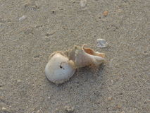 Shells on the sand. Stock Photography