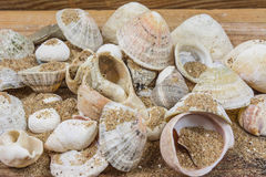 Shells and sand. On wooden table Royalty Free Stock Image