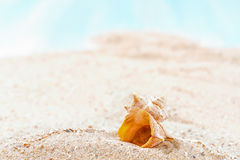 Shells  on sandy beach Royalty Free Stock Image