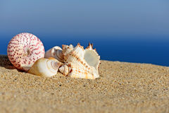 Shells on sandy beach Stock Photos