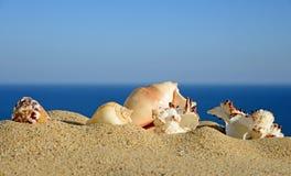 Shells on sandy beach Stock Images