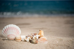 Shells on sandy beach with blue sky and sea. Shells on a sandy beach with blue sea at the background Stock Images