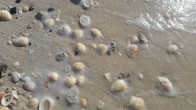 Shells on a sandy beach royalty free stock images
