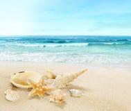 Shells on sandy beach. stock photos