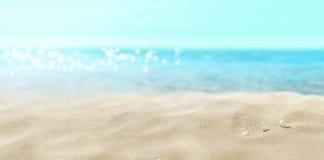 Shells on sandy beach. royalty free stock image