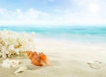 Shells on sandy beach royalty free stock photo