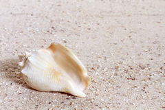 Shells on sandy beach Royalty Free Stock Images
