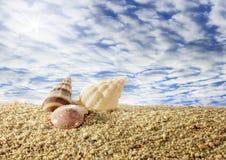 Shells on sandy beach with sky. Royalty Free Stock Photos