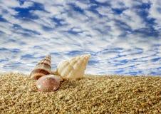 Shells on sandy beach with sky. Stock Photos
