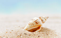 Shells  on sandy beach Royalty Free Stock Photos